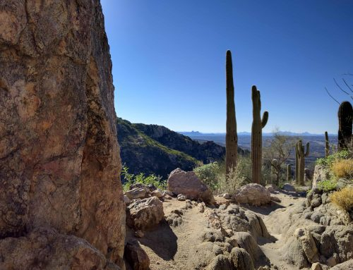 Tucson, AZ – Magic in the Desert